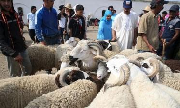عيد الأضحى: ترقيم أزيد من 4 ملايين ونصف مليون رأس من الأغنام والماعز