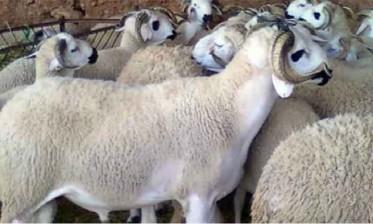 """وزارة البيئة تطلق حملة وطنية تحت شعار """"عيد مبارك نظيف"""""""