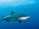 Mystère sur la plage des requins