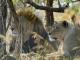 Les animaux emblématiques d'Afrique S02E01
