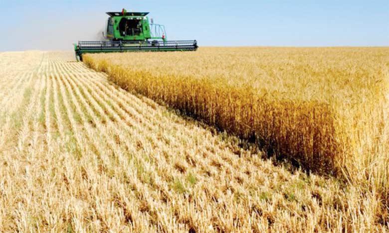 Le recul des récoltes céréalières ne concerne pas uniquement l'Afrique mais touche les principales zones  de production où la baisse est estimée à -2.4% comparativement à la campagne précédente.  Ph. DR