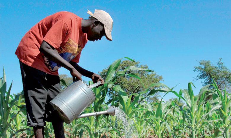 Selon une étude de la FAO, 83% des pertes économiques induites par la sécheresse impactent directement  le secteur agricole des pays en développement.                                                                                                                              Ph. DR