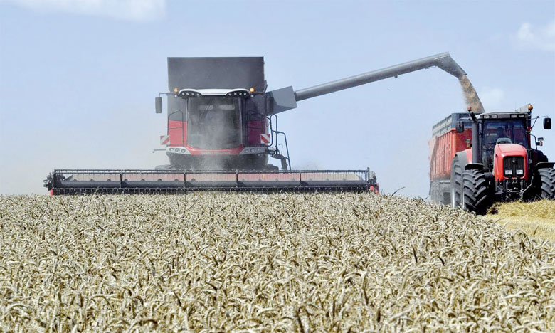 Le commerce mondial de céréales devrait approcher les 417 millions de tonnes, soit près de 1% de moins que le niveau record atteint au cours de la saison commerciale 2017-2018.