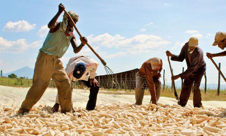 80% des terres cultivées en Afrique sont préparées à l'aide d'outils manuels tandis que 15% sont travaillées avec les animaux de trait. Ph. DR