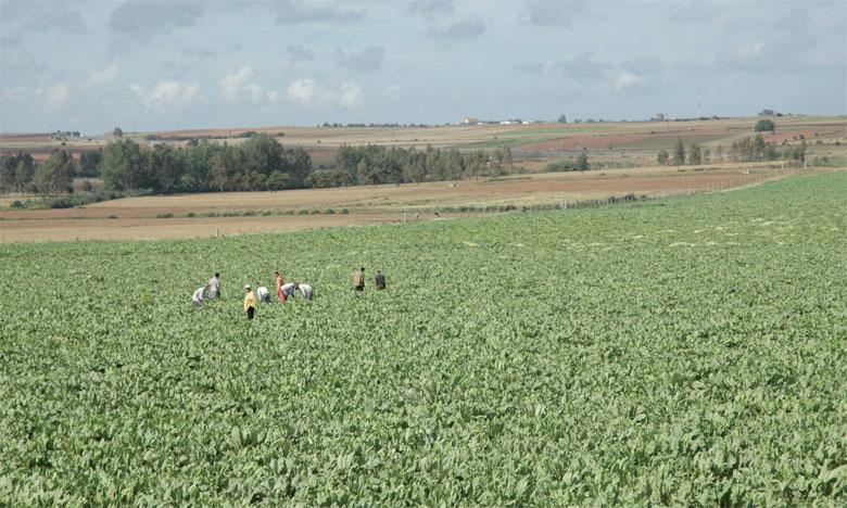 Le département de l'Agriculture et l'ensemble de ses partenaires sont appelés à se projeter avec un nouvel élan, en tenant compte des résultats et impacts du Plan Maroc vert.                                        Ph. Saouri