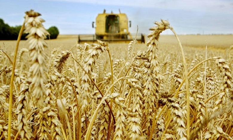 Rencontre Maroco-Allemande sur la filière céréalière
