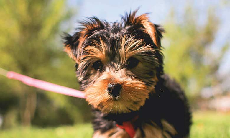 Une démonstration de sports canins et un concours de beauté féline animeront l'espace de loisir  du salon Animaly.