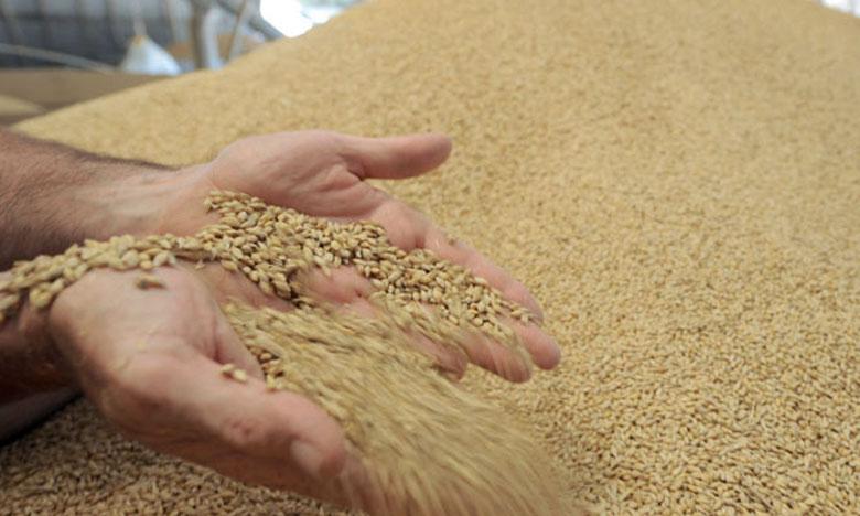 1,133 million de quintaux de blé tendre à fournir aux minoteries