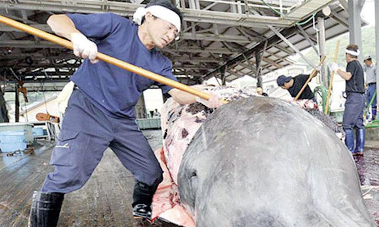 La saison dernière, les pêcheurs nippons ont tué près de 600 baleines  au titre des expéditions scientifiques, à la fois dans l'Antarctique et le Pacifique. Ph. DR