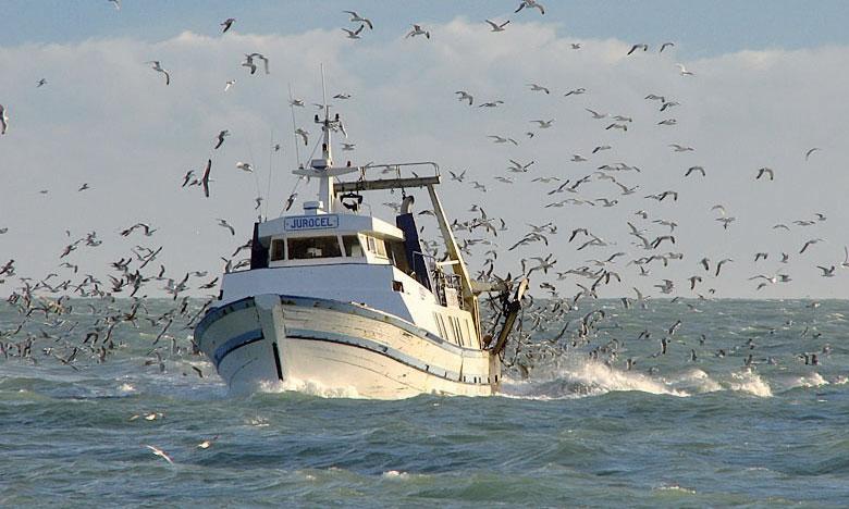 Les captures mondiales des pêcheries ont augmenté de 10% alors que la consommation alimentaire des oiseaux de mer a diminué de 19% entre 1970–1989 et 1990–2010. Ph. DR