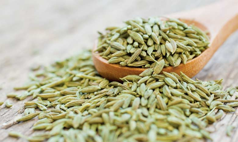 L'anis est cultivé en bour sur une superficie de 850ha, en alternance avec les céréales dans une logique d'assolement.