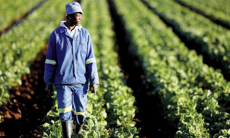 En mars dernier, la FAO avait estimé que les catastrophes naturelles ont engendré, ces dix dernières années, 95,5 milliards de dollars de perte au secteur agricole des pays en développement. Ph. DR