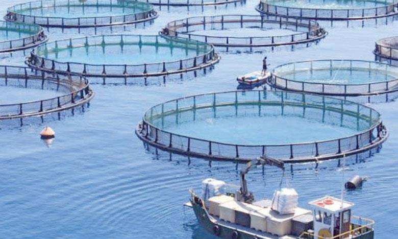 L'étude en projet doit fixer les orientations pour le développement de l'aquaculture et planifier l'activité aquacole en concertation avec l'ensemble des parties prenantes.