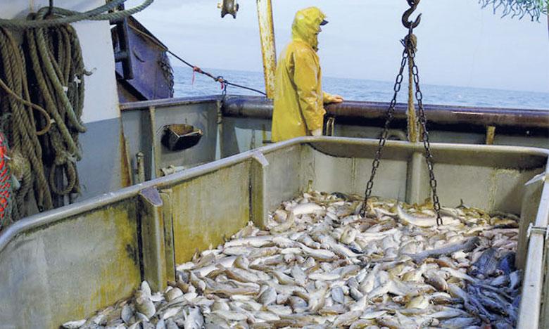 C'est en Méditerranée et en mer Noire que l'on observe la plus forte proportion de stocks exploités à un niveau biologiquement non durable. Dans ces zones, la pêche non durable représente 62,2%des stocks. Ph. DR.