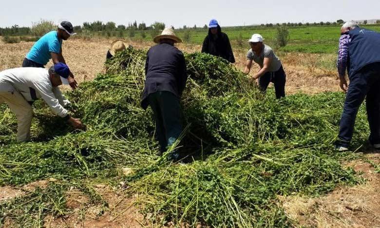 L'ONSSA appelle les agriculteurs à utiliser uniquement les produits homologués et à respecter scrupuleusement  le mode d'emploi.
